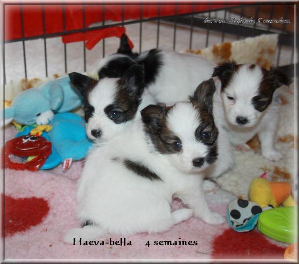 haeva-bella 4 sems 3