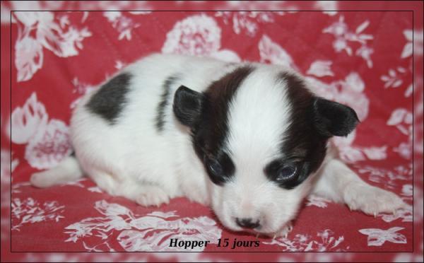hopper 15 jrs 4