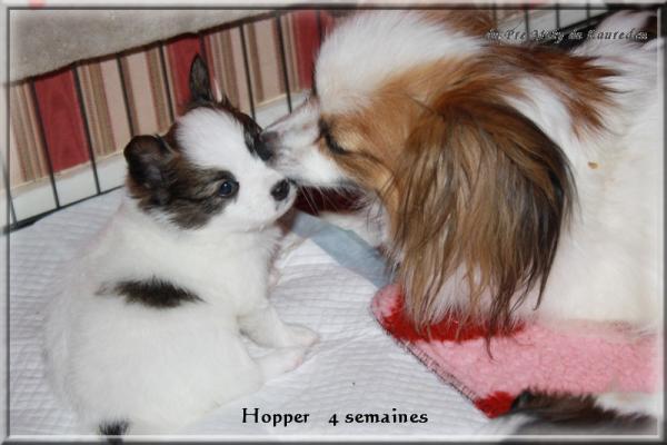 hopper 4 sems 3