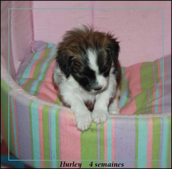 hurley 4 sems 3