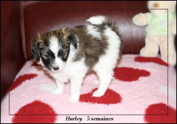 hurley 5 sems 3