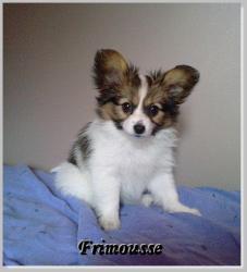 Frimousse-2.jpg