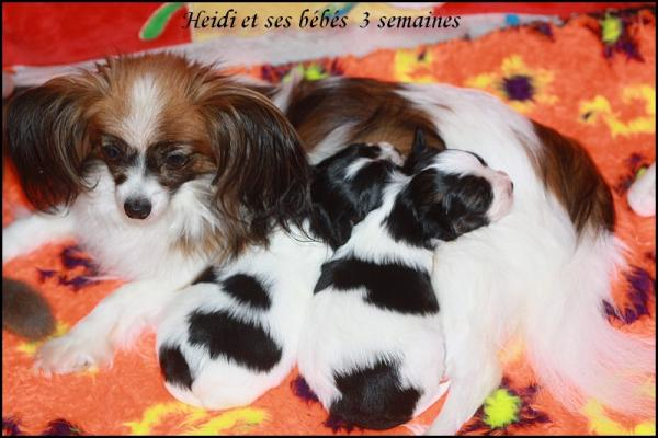Chiots a 3 semaines