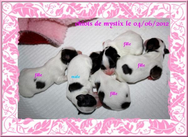 chiots-de-mystix-01-06-2012-1.jpg