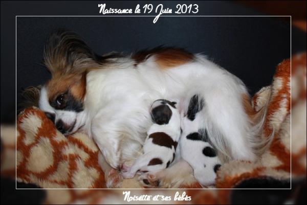 chiots-de-noisette-nes-le-19-06-2013-1.jpg