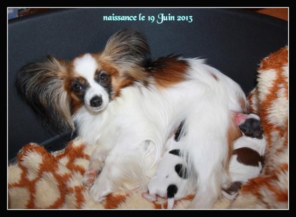 chiots-de-noisette-nes-le-19-06-2013-2.jpg