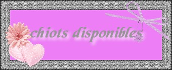 chiots-disponibles.jpg