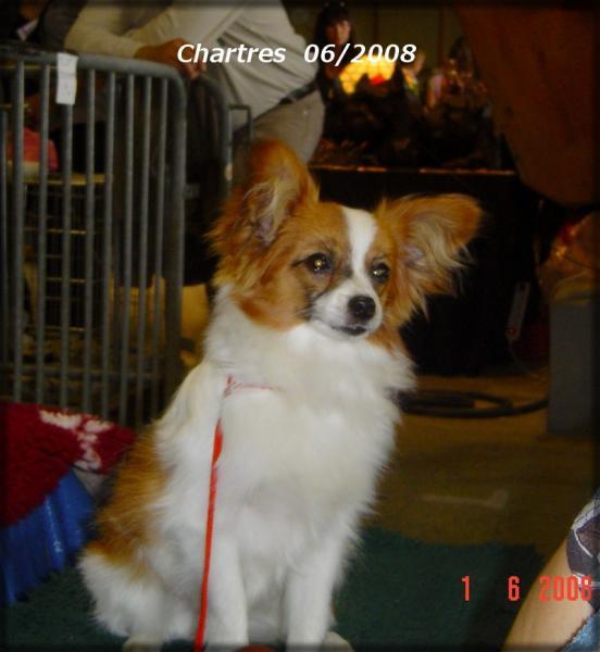 chopin-chartres-2008.jpg