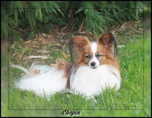 chopin-septembre-2013.jpg
