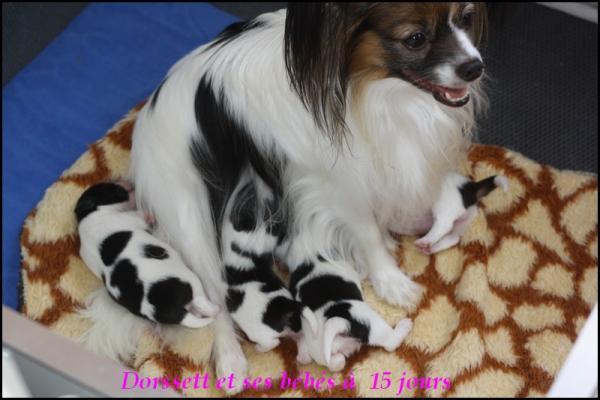Dorssett et ses bebes a 15 j 1