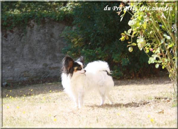 elody-mon-reve-09-2012-2.jpg