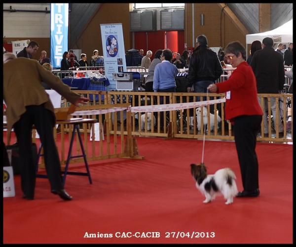 expo-amiens-cac-cacib-4.jpg