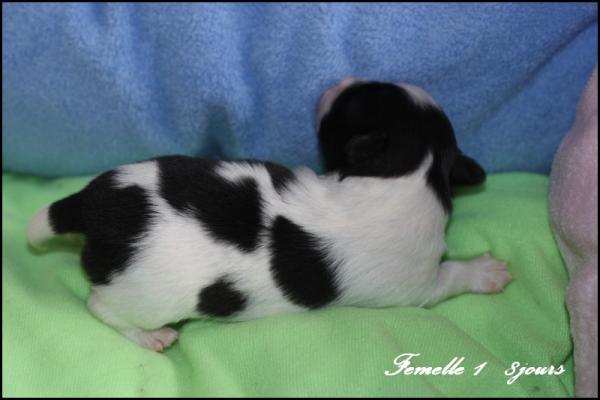 Femelle 1 8 jours 5