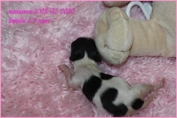 Femelle 4 jours 3