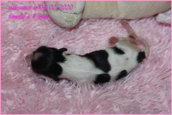 Femelle 4 jours 5