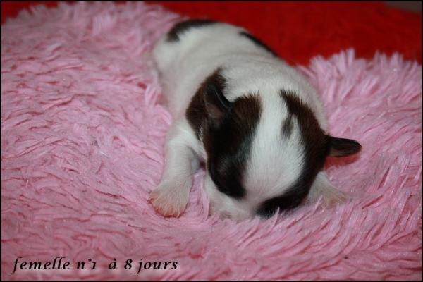 Femelle n 1 8 jours 3