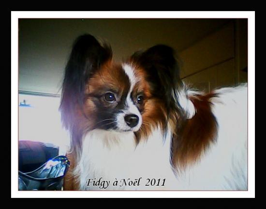 fidjy-a-noel-20112.jpg