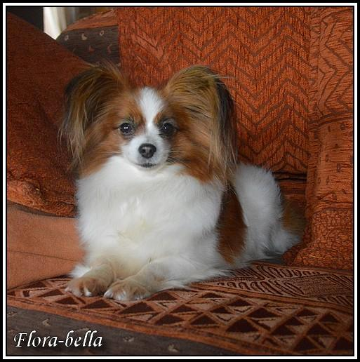 Flora bella 2