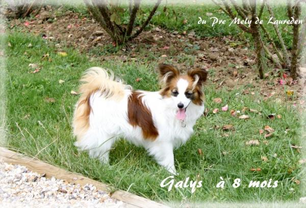 galys-a-8-mois-mystix-chopin-1.jpg