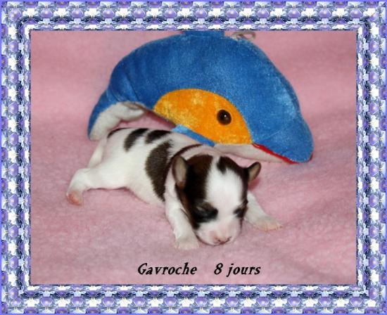 gavroche-3.jpg