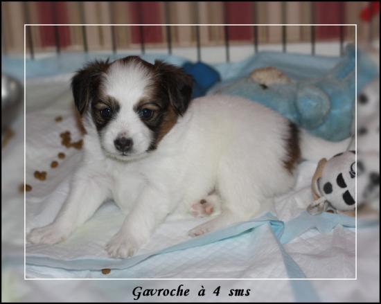 gavroche-a-4-sms-1.jpg