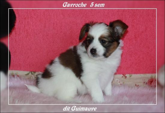 gavroche-dit-guimauve-a-5-sem-1.jpg