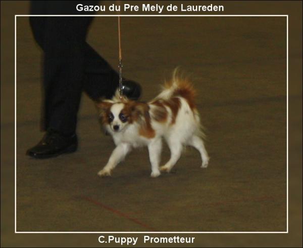 gazou-chartres-cacs-10-06-2012.jpg