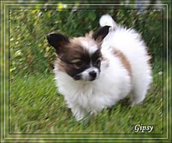 gipsy-7-sms-1.jpg