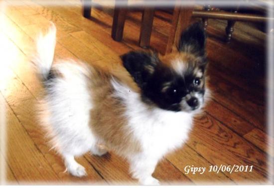gipsy-a-3-mois-10-06-20111.jpg