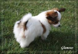glamour-7-sms-4.jpg