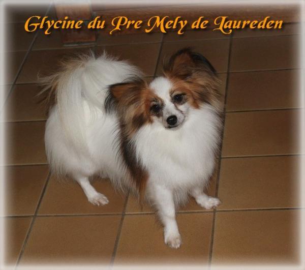 glycine-10.jpg