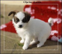 glycine-6-sems-1.jpg