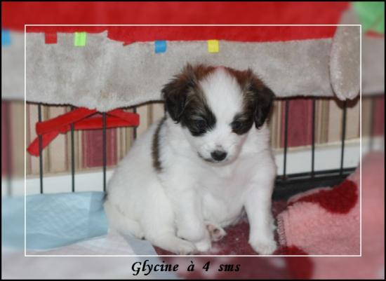 glycine-a-4-sms-2.jpg