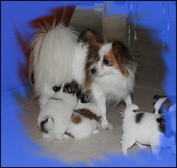 Glycine et ses chiots a 1 mois