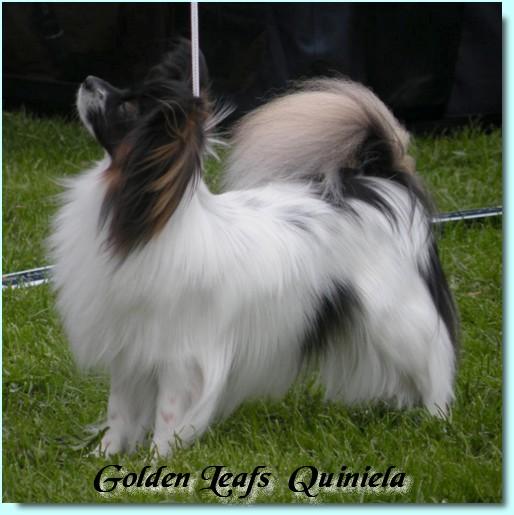 golden-leafs-quiniela-1.jpg