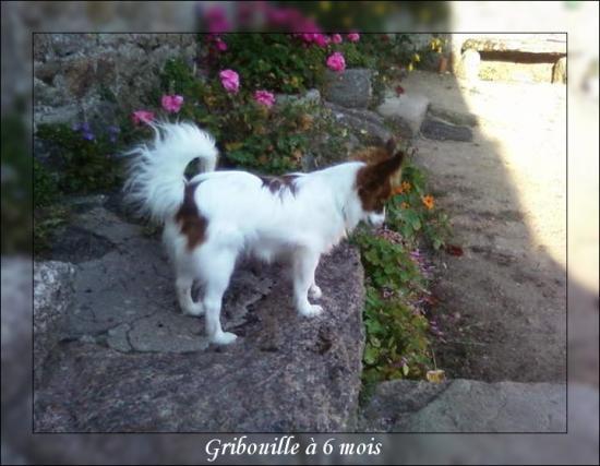 gribouille-6-mois-2.jpg
