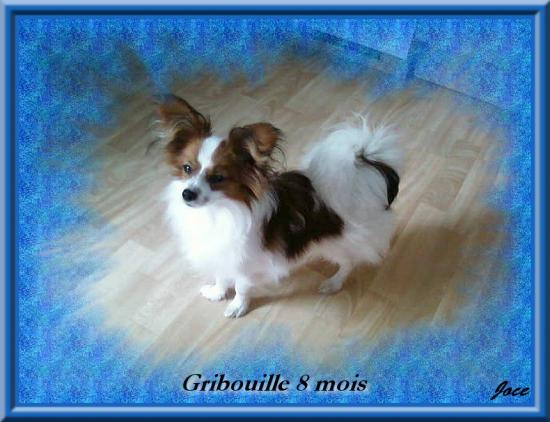 gribouille-a-8-mois.jpg