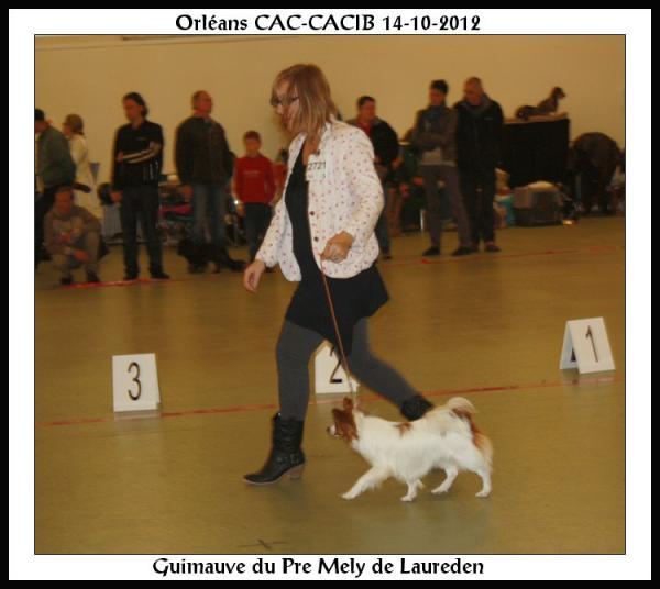 guimauve-orleans-cacib-14-10-2012-1.jpg