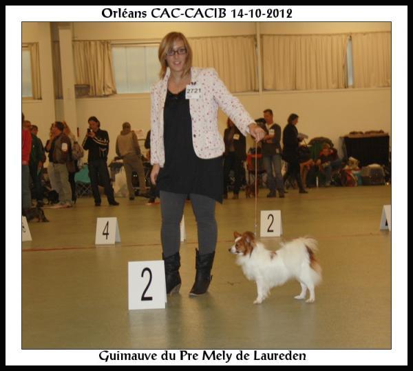 guimauve-orleans-cacib-14-10-2012-2.jpg