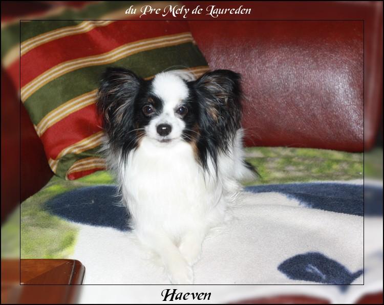 haeven-1-an-5.jpg