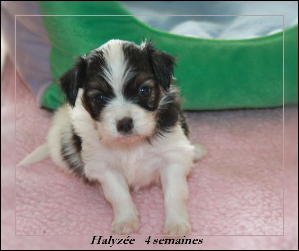 haiysee-4-sems-2.jpg