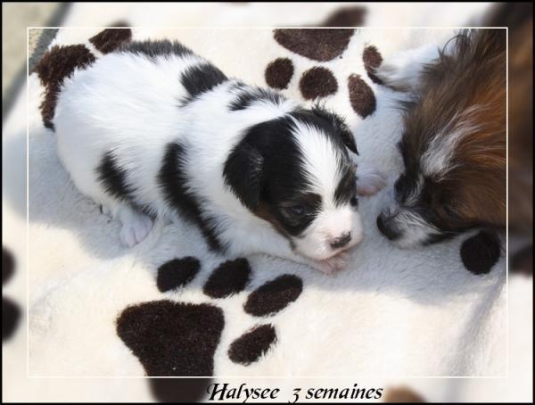 halysee-3-sems-2.jpg