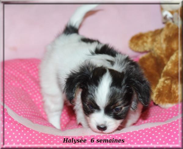 halysee-6-sems-2.jpg