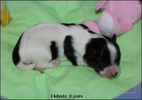 halysee-8-js-3.jpg