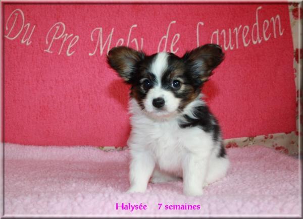 halysee-a-7-sems-4.jpg