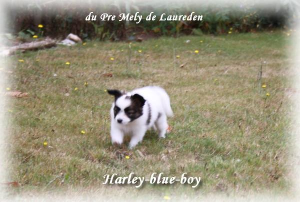 harley-a-7-sems-1.jpg