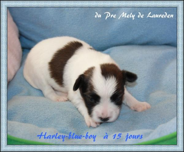 harley-blue-boy-a-15-jours-1.jpg