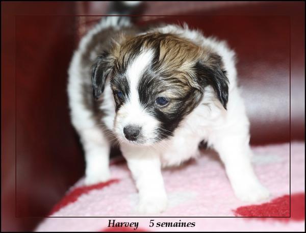 harvey-5-sems-5.jpg