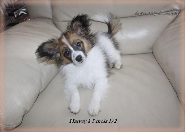 harvey-a-3-mois-et-demi-3.jpg
