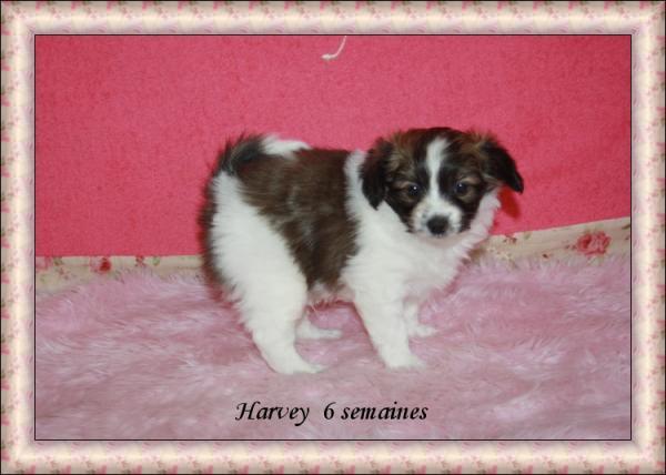 harvey-a-6-sems-2.jpg